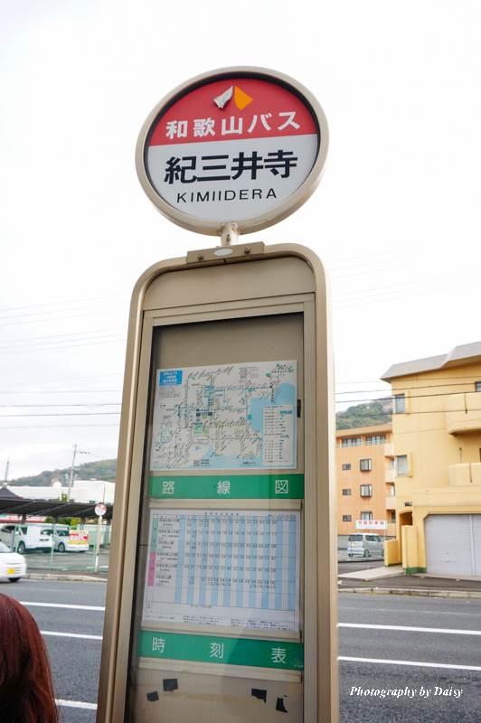 wakayama-sakura-76