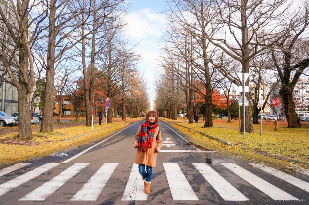 北海道, 北海道大學, 賞楓, 賞銀杏, 銀杏大道, 日本旅遊, hokkaido-Sapporo, 楓葉