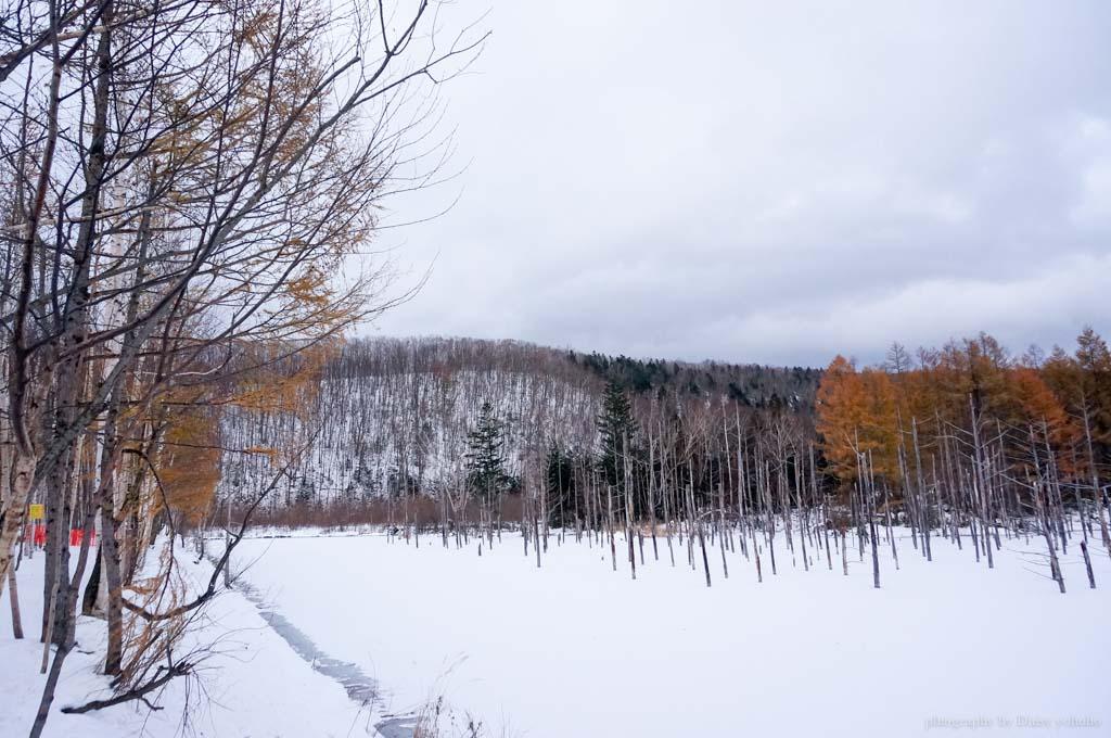北海道, 青池, 富良野農場, 北海道雪景, 日本旅遊, 北海道自助旅行, 北海道下雪, 北海道自駕, 薰衣草冰淇淋