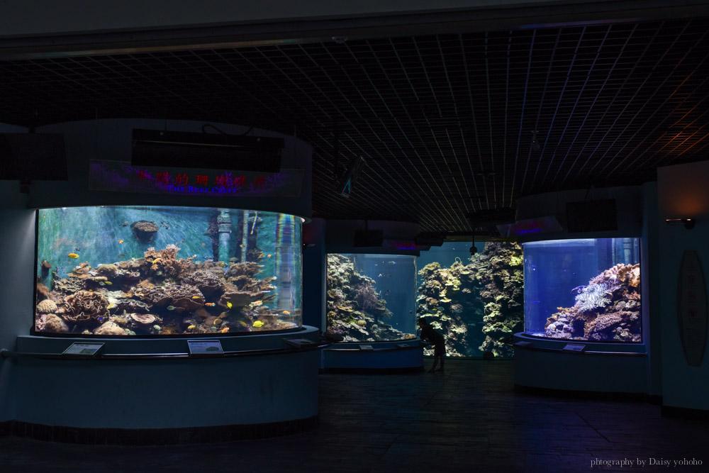 夜宿海生館, 屏東海洋生物博物館, 墾丁旅遊, 墾丁景點, 海生館好玩, 海底隧道, 台灣水域館, 珊瑚王國館