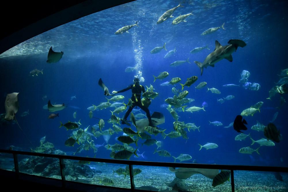 海生館, 屏東海洋生物博物館, 墾丁旅遊, 墾丁景點, 海生館好玩, 海底隧道, 台灣水域館, 珊瑚王國館