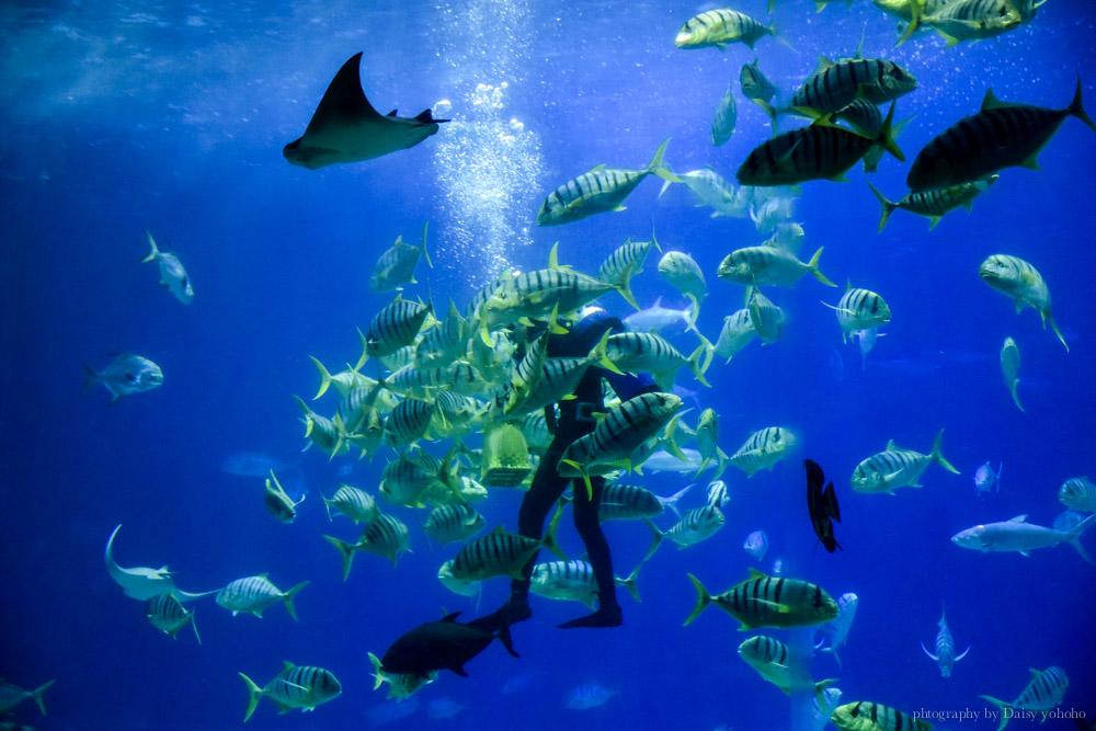夜宿海生館, 屏東海洋生物博物館, 墾丁旅遊, 墾丁景點, 海生館好玩, 海底隧道, 台灣水域館, 珊瑚王國館, 鯊魚咬吐司, 海生館餐廳,  國立海洋生物博物館