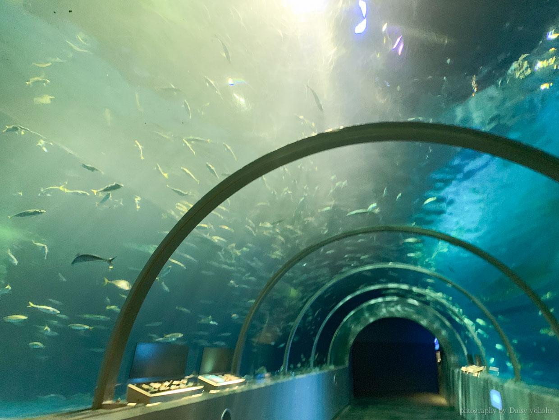 登別尼克斯海洋公園, 札幌景點, 登別景點, 北海道景點, 北海道水族館, 登別水族館