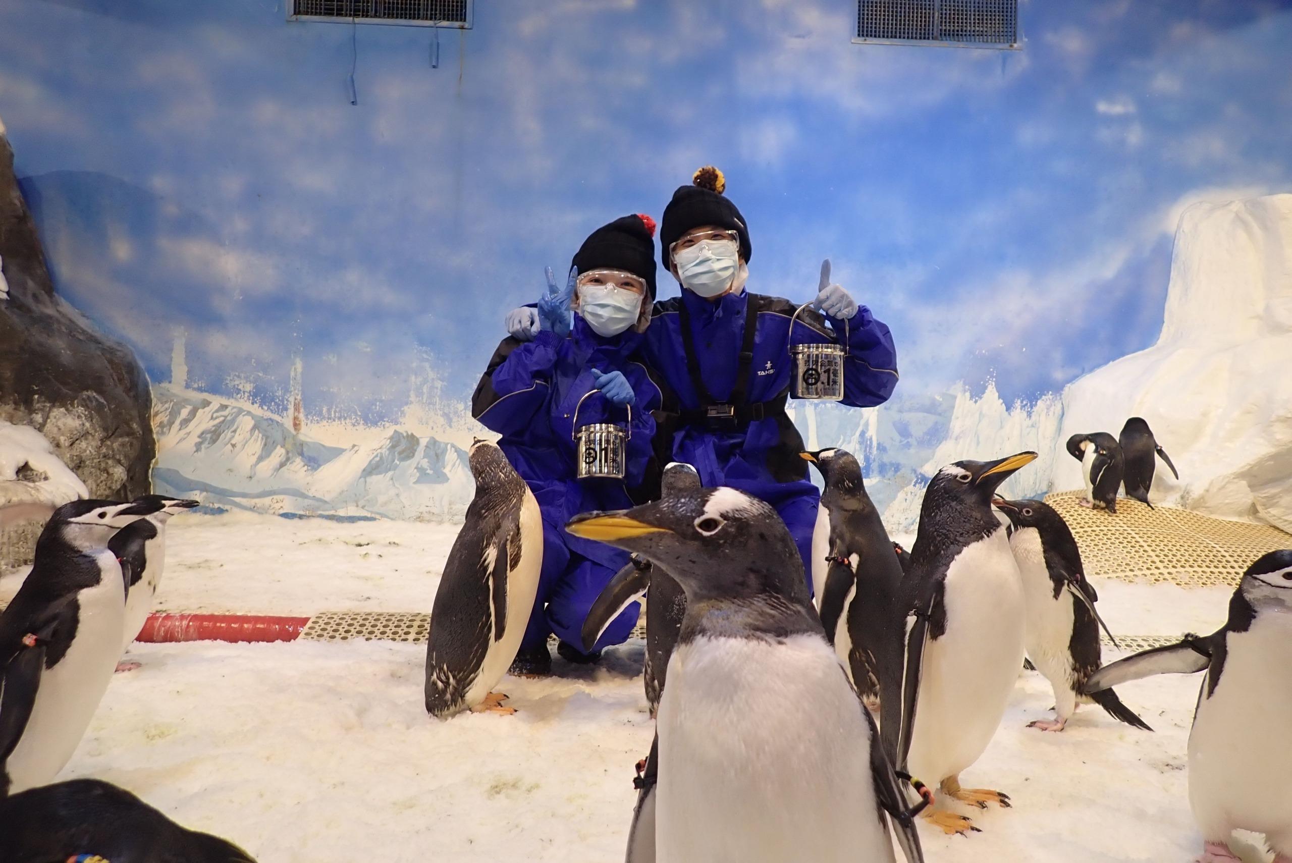 企鵝餵食體驗, 海生館企鵝飼育員, 海生館活動, 屏東海生館, 海生館企鵝, 海生館極地區, Klook我與企鵝的0.1毫米