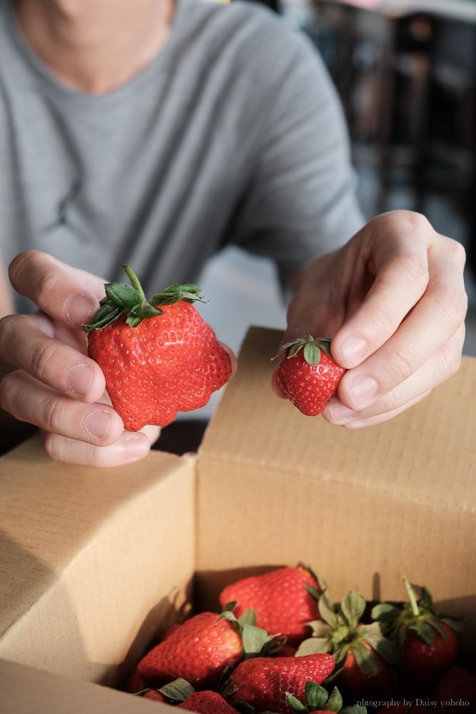 善化草莓季, 美裕草莓園, 善化景點, 台南採草莓, 善化草莓, 高架草莓, 草莓冰淇淋, 草莓冰淇淋, 草莓香腸