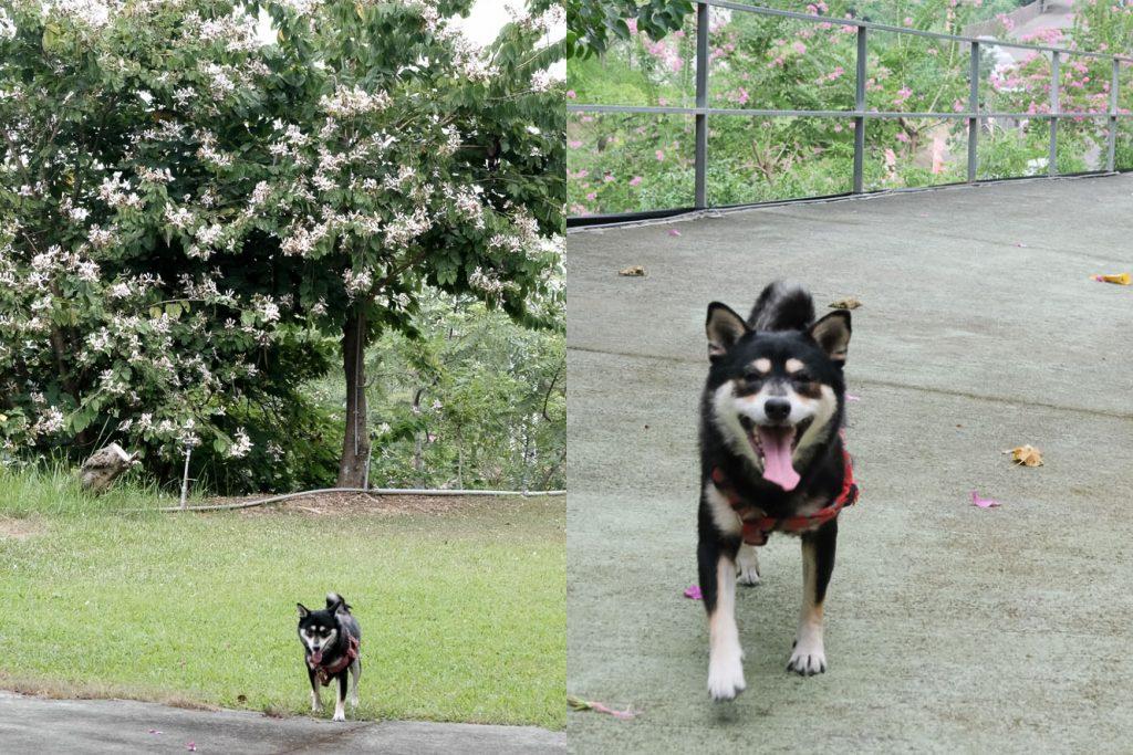 森呼吸寵物休閒廣場,毛小孩的玩水天堂、寵物樂園!台南關廟、占地廣大。