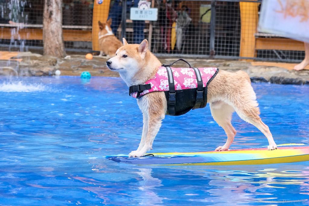 森呼吸寵物休閒廣場, 關廟景點, 台南寵物樂園, 台南毛小孩游泳池, 森呼吸狗大小收費, 狗狗玩水泳池