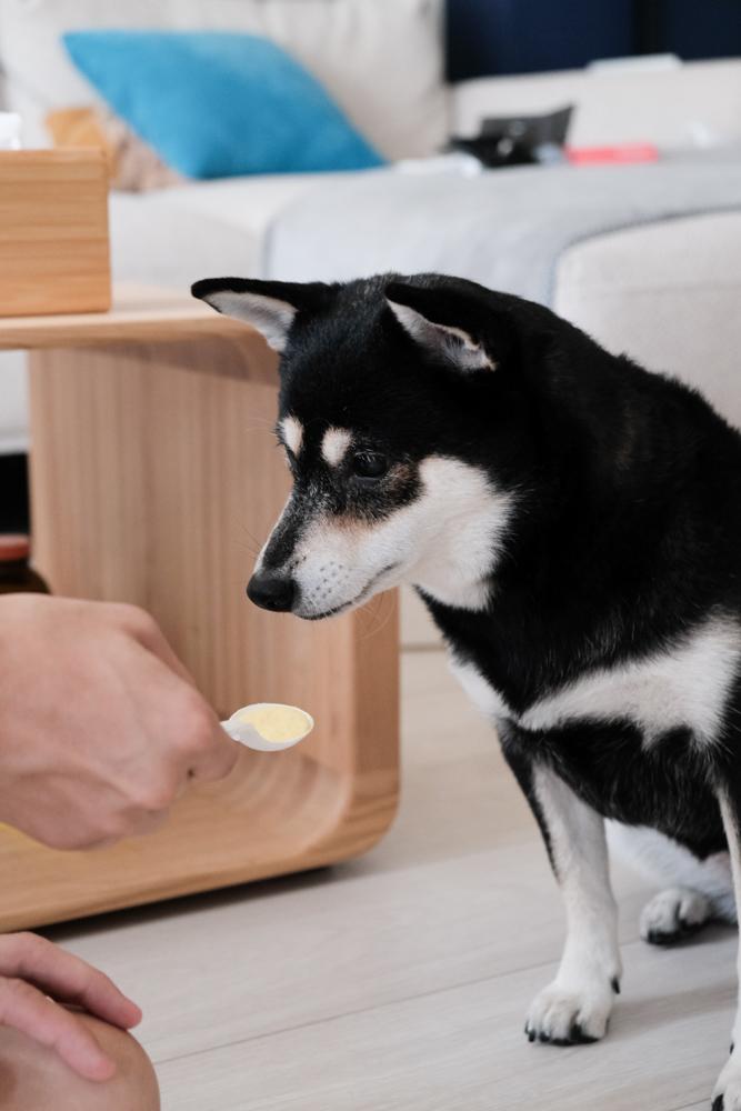狗狗營養品推薦,汪汪寶貝~狗狗腸胃保健、增骨骼、增腸力、毛髮增亮麗!